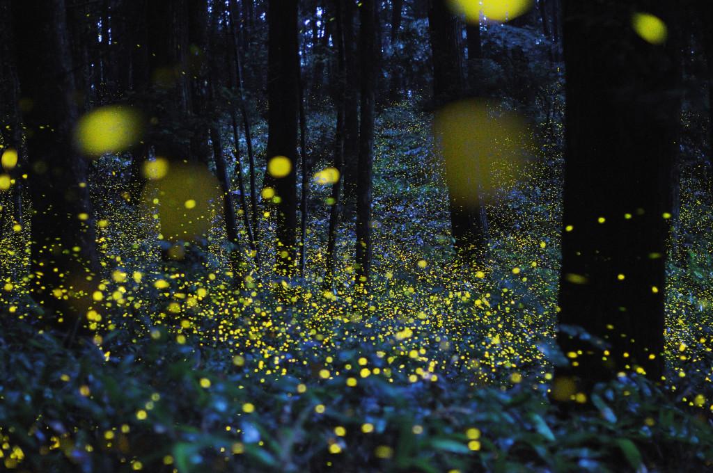 w1_fireflies