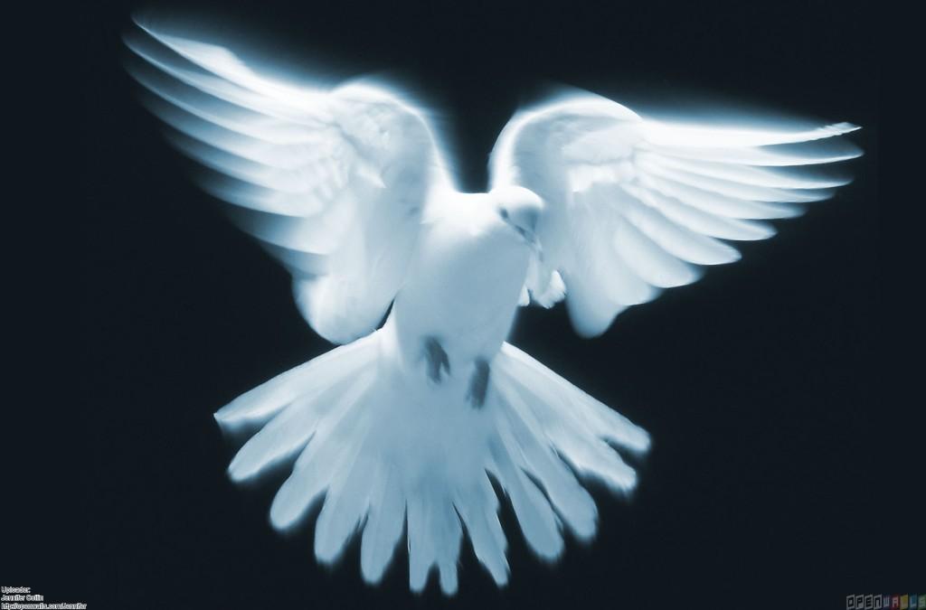 white_dove_5_1752x1155